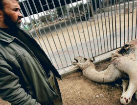 gaza_zoo