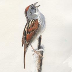 Sparrow Ed3