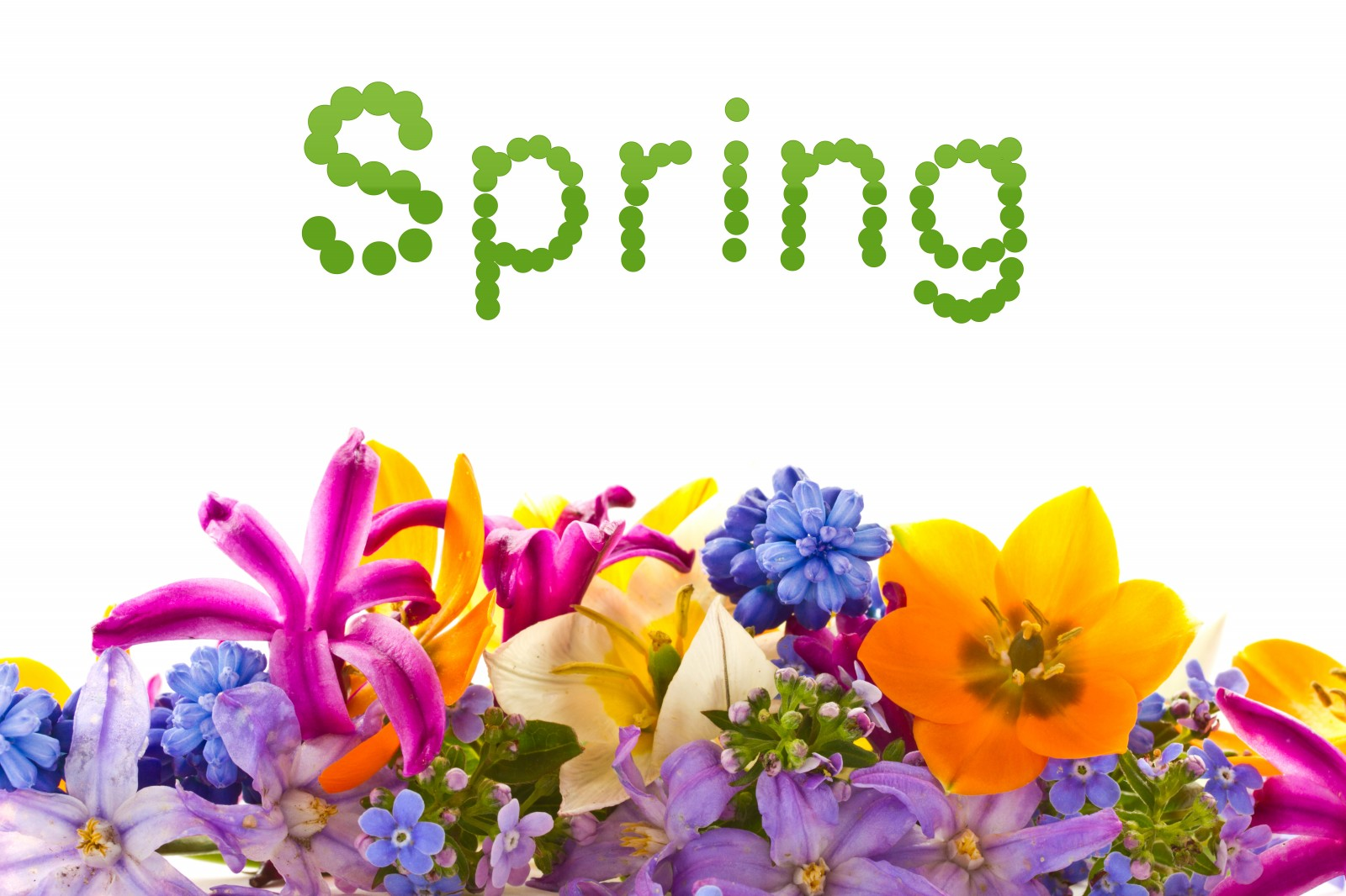 Springs flowers choice image flower decoration ideas springs flowers gallery flower decoration ideas spring is in the air but its still bleak winter mightylinksfo
